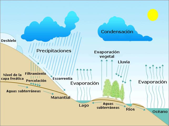 CICLOS BIOGEOQUÍMICOS | BiologÍa del suelo